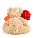 Teddy bear for Valentine day. Picture of brown furry Teddy bear with red beautiful rose and heart-shaped greeting card isolated on white background, back side of royalty free stock image
