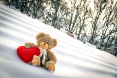 Teddy Bear on Valentine's Day Royalty Free Stock Photo