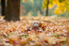 Teddy bear in vintage suitcase in autumn leaves Stock Images