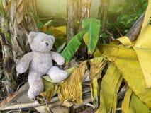 Teddy bear was left alone. royalty free stock photo