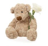 Teddy bear with white rose Royalty Free Stock Images