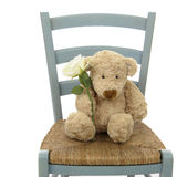 Teddy bear with white rose Royalty Free Stock Photo