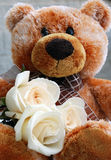 Teddy bear with white roses. Brown teddy bear holding three white roses Royalty Free Stock Photos
