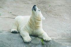 Teddy bear on a white stone. Cute teddy bear on a white stone Royalty Free Stock Photo