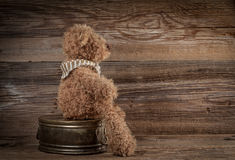 Teddy bear. Royalty Free Stock Photography