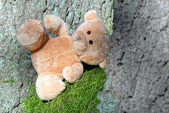 Teddy bear in the woods Stock Image