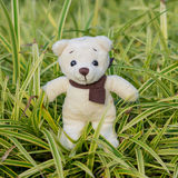 TEDDY BEAR yellow, color with scarf on ornamental plants Royalty Free Stock Photos