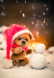 Teddy bears in christmas still life Royalty Free Stock Image