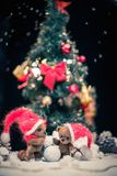 Teddy bears in christmas still life Royalty Free Stock Images