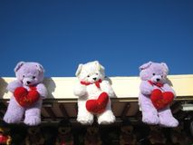 Teddy bears display Royalty Free Stock Photos
