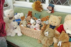 Teddy Bears Galore Stock Images