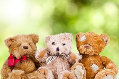Teddy bears grouped Royalty Free Stock Photo