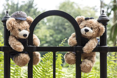 Teddy bears hanging on a branch Royalty Free Stock Image