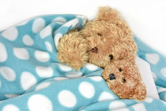 Teddy bears under polka dot blanket. Pair of fuzzy brown teddy bears snuggling under a polka dot blanket Royalty Free Stock Photography