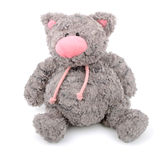 Teddy cat. Grey teddy cat with pink nose isolated royalty free stock images