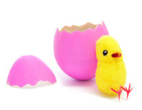 Teddy chick and hatched pink easter egg. A teddy chick emerged from a hatched pink easter egg on a white background Royalty Free Stock Image