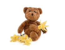 Teddy and Daffodils-Spring Concept. Teddy holding daffodil, intentional drop shadow Stock Photography