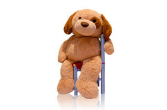 Teddy dog toy. Sitting on a chair Stock Photos