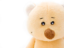 Teddy face. Face of a cute teddy bear isolated on white Royalty Free Stock Image