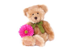 Teddy with flower Stock Photo