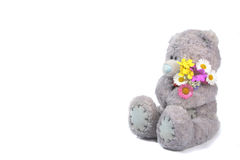 Teddy with flowers Royalty Free Stock Photo