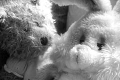 Teddy Friends. A pair of teddy friends in soft focus Stock Images
