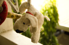 Teddy. Hanging and dry teddy  after washing Royalty Free Stock Images