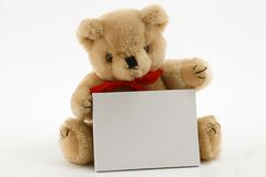 Teddy holding card. Teddy bear holding blank card, isolated on white background Royalty Free Stock Images