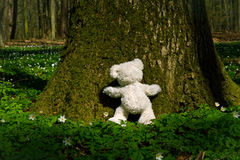 Teddy hugs tree Royalty Free Stock Image