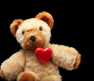 Teddy lover Stock Images