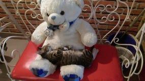 Teddy mijn liefde stock afbeelding