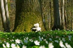 Teddy omhelzingen een boom Stock Foto's