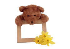 Teddy and Photo Frame Stock Photos