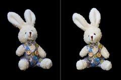 Teddy Rabbit Stock Photo