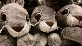 Teddy rabbit Royalty Free Stock Photos