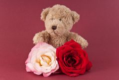 Teddy With Roses Royalty Free Stock Photography