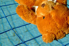 Teddy saved by pool net Royalty Free Stock Images