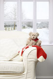 Teddy Sitting On Chair Royalty Free Stock Photos