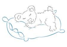 Teddy slaapt Royalty-vrije Stock Fotografie