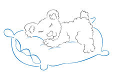 Teddy is sleeping Royalty Free Stock Photography