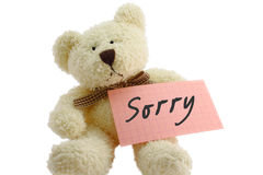 Teddy - sorry. Front view of teddy bear toy with Sorry note, isolated on white background Royalty Free Stock Photography