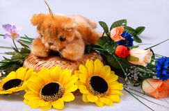 Teddy still-life Royalty Free Stock Photo
