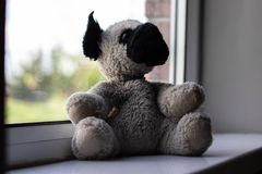 Teddy on window sill. Pug Jack Russell Cross cute puppy sat on window sill. how much is that doggy in the window looking at camera royalty free stock photos