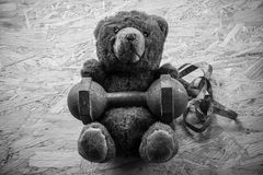 Teddybärübung mit Dummkopf und Band Stockfoto