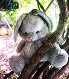 Teddybär auf Baum Lizenzfreies Stockfoto