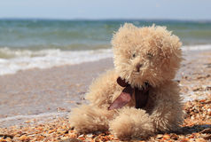 Teddybär betreffen einen Strandfeiertag Lizenzfreie Stockbilder