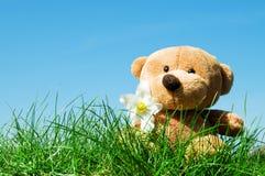 Teddybär betreffen Gras Stockbilder