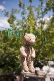 Teddybär, der in den Sonnenstrahlen trocknet Lizenzfreies Stockbild