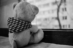 Teddybär, der durch das Fenster schaut Stockbilder