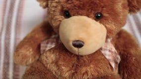 Teddybär, der von Seite zu Seite nah an schwingt stock video footage